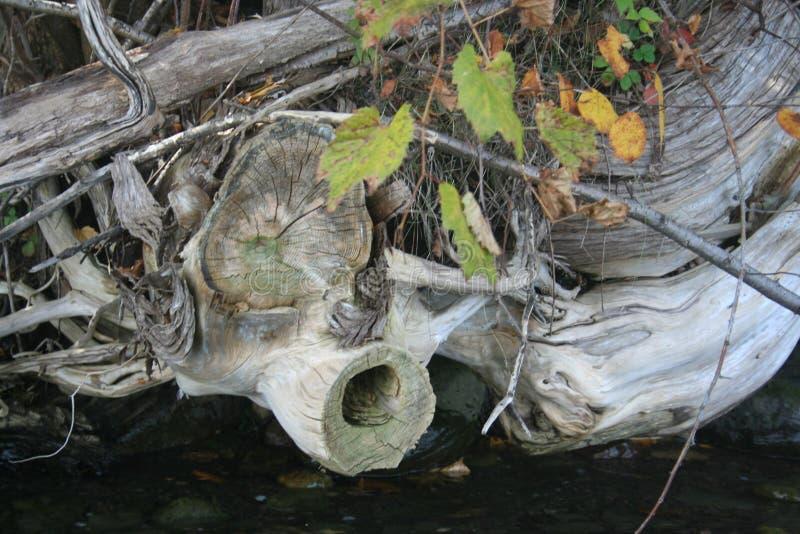 Formes de Shoreline photographie stock