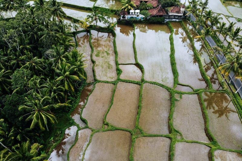 Formes g?om?triques abstraites des colis agricoles dans la couleur verte Gisements de riz de Bali avec l'eau et des palmiers a?ri image stock