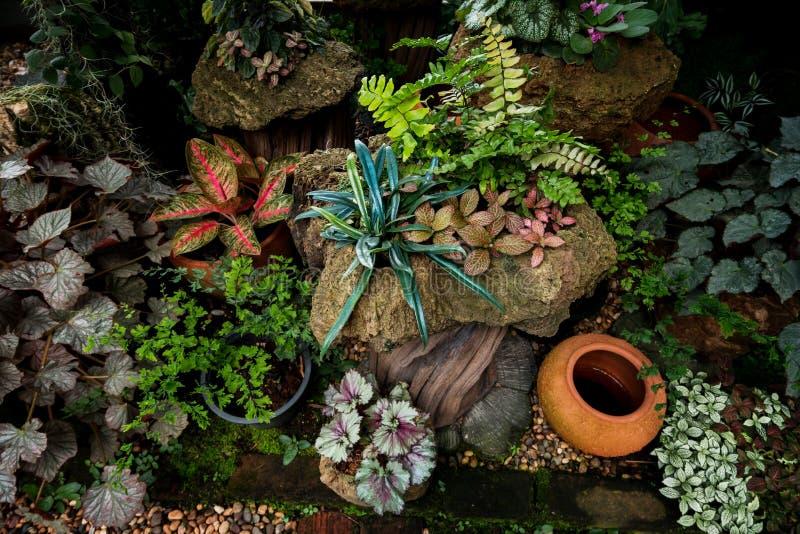 Formgivareträdgård med den nya variationsväxten arkivfoto