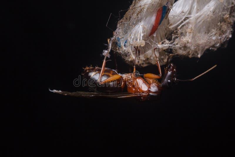 Formiche sotteranee, formiche volanti in natura fotografie stock libere da diritti