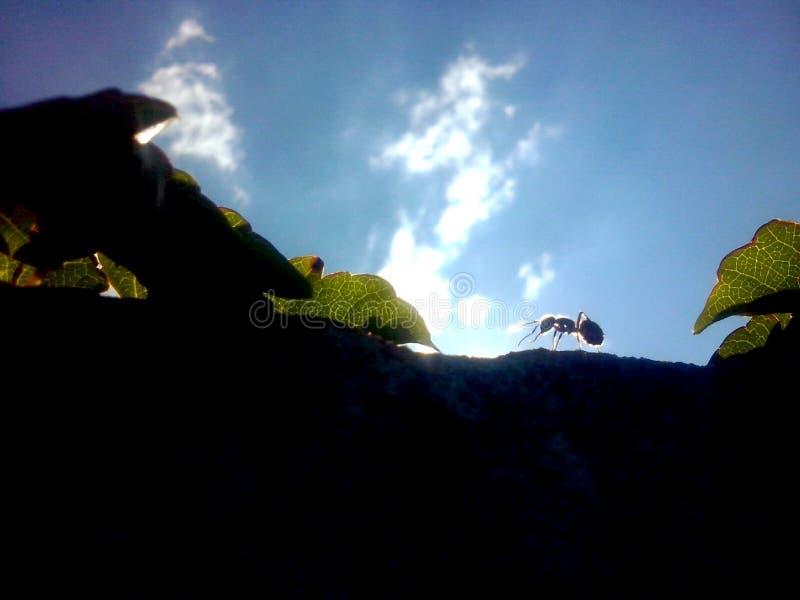 Formiga contra o céu azul foto de stock royalty free
