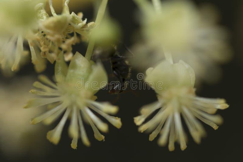 Formiga que anda em um ramo que procura pelo alimento Fotografia macro C imagem de stock royalty free