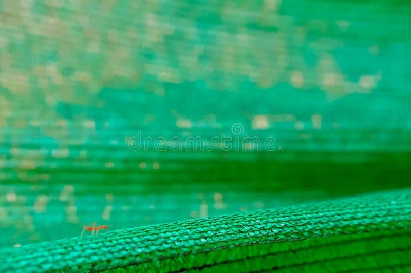 Formiga vermelha que anda na rede de proteção verde imagem de stock