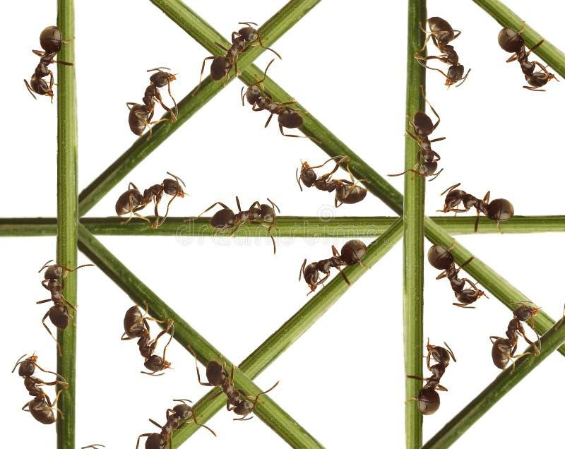 Formigas em uma grama verde. imagens de stock royalty free
