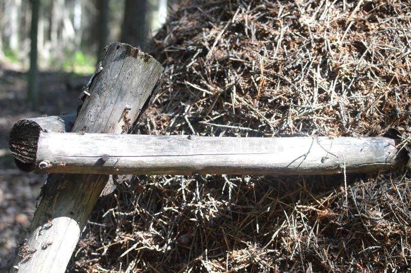Formigueiro grande na floresta do abeto foto de stock royalty free