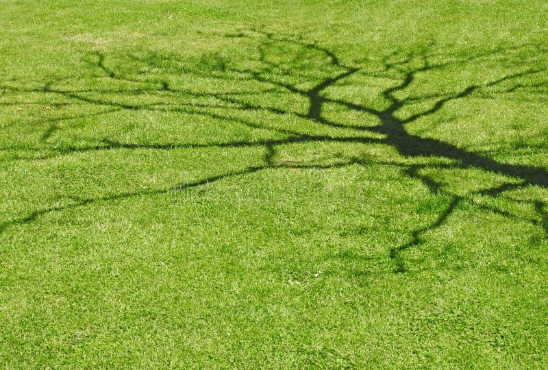 Formulário abstrato da sombra dos ramos de árvore mostrados em silhueta na grama do gramado fotos de stock royalty free