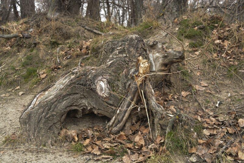 Formulário estranho das árvores foto de stock royalty free