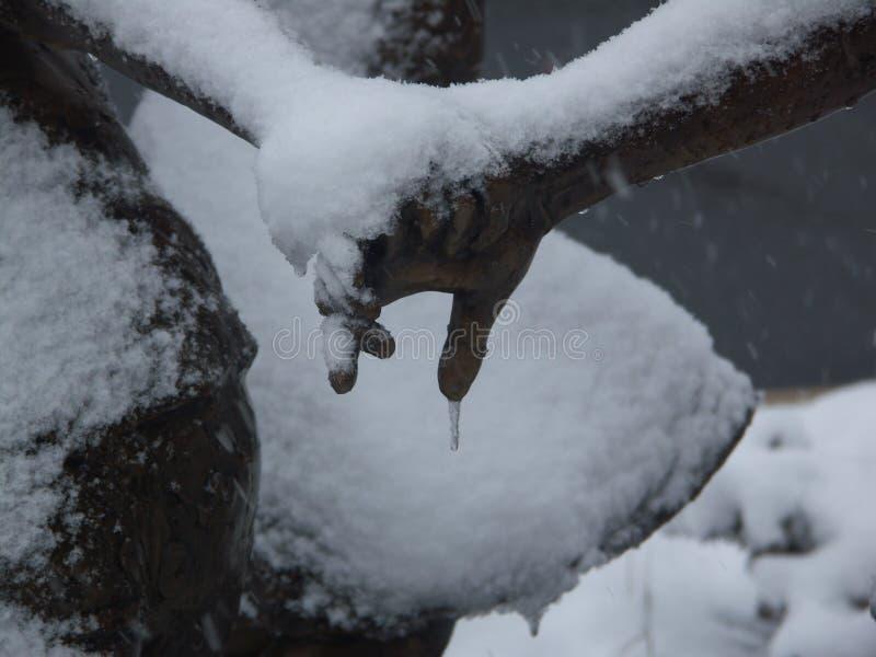 Formulários do sincelo no ramo coberto de neve fotos de stock