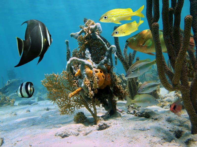 Formulários estranhos da vida marinha em um recife de corais imagem de stock