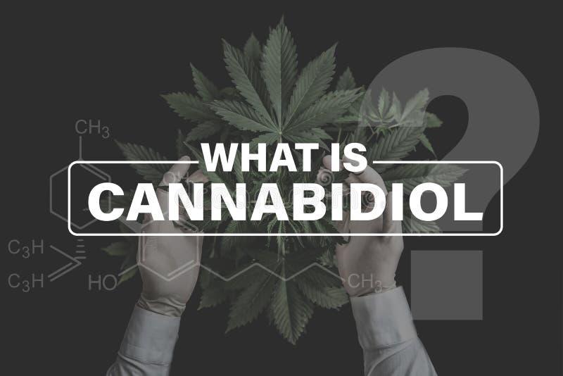 Formula di Cannabidiol CBD, cannabis di coltivazione della canapa delle piante della vegetazione, cannabis crescente indica, verd fotografia stock libera da diritti