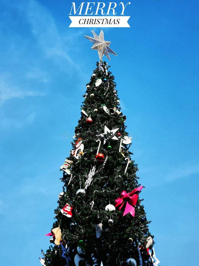 Formulazione del Buon Natale con l'albero di Natale su chiaro cielo blu fotografia stock