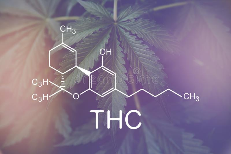 Formule de THC, Tetrahydrocannabinol marijuana m?dicale, industrie de chanvre, ?l?ments de CBD et de THC dans les cannabis images stock