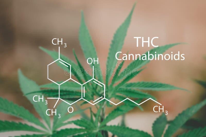 Formule structurelle de CBD, industrie de cannabis, image stock