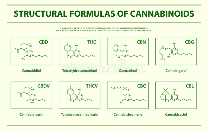 Formules structurelles d'infographic horizontal de cannabinoids naturels principaux illustration stock