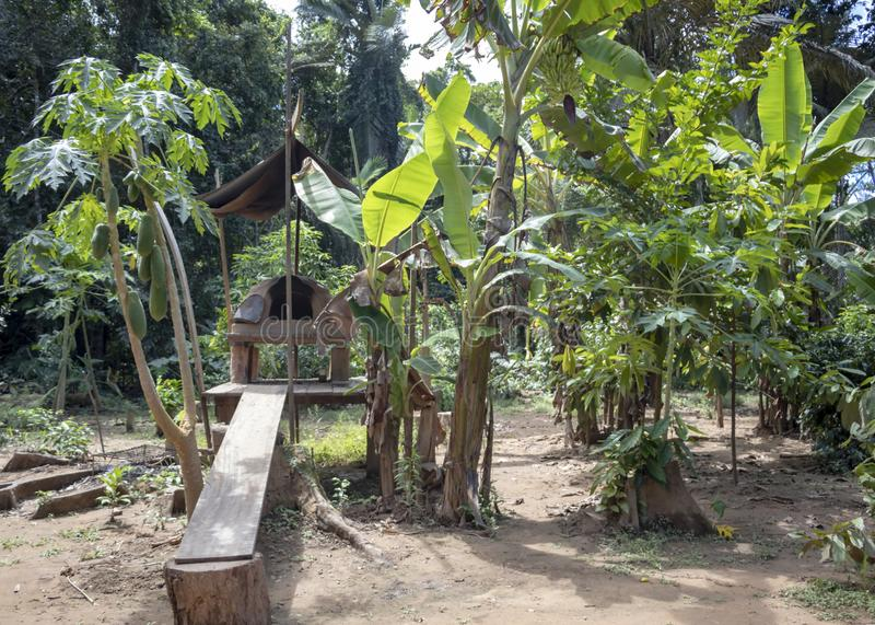 Forno de cozimento exterior do nativo americano tradicional na floresta úmida da bacia do Rio Amazonas em Ámérica do Sul imagens de stock