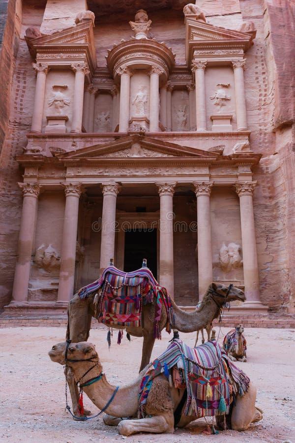 Forntida arkitektur för kassa med kamel i dalen i Petra, Jordanien arkivbild