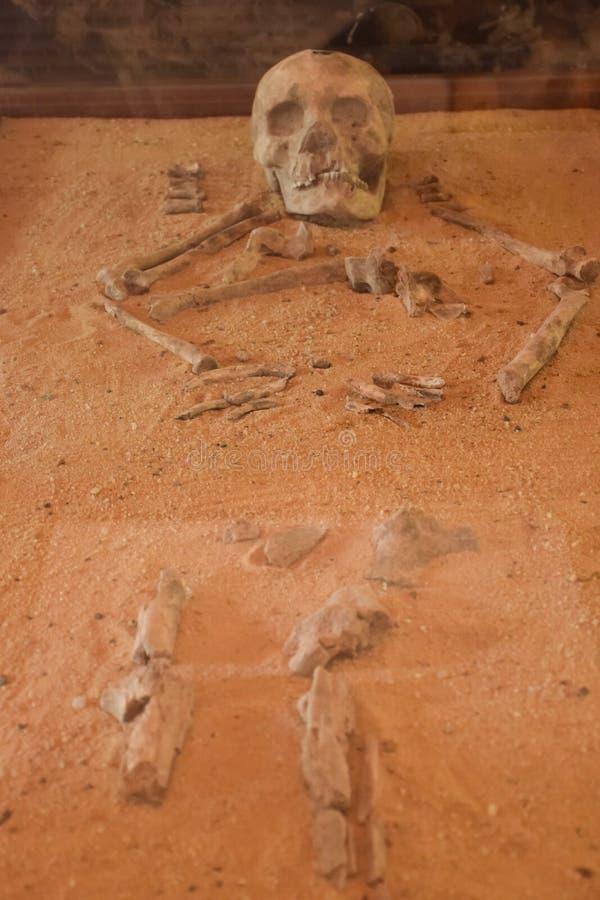 Forntida ben fotografering för bildbyråer
