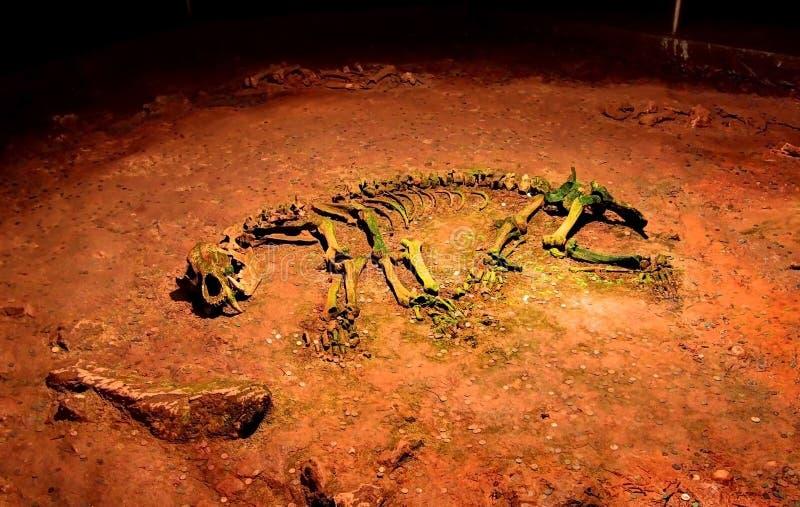 Forntida björnskelett royaltyfri fotografi