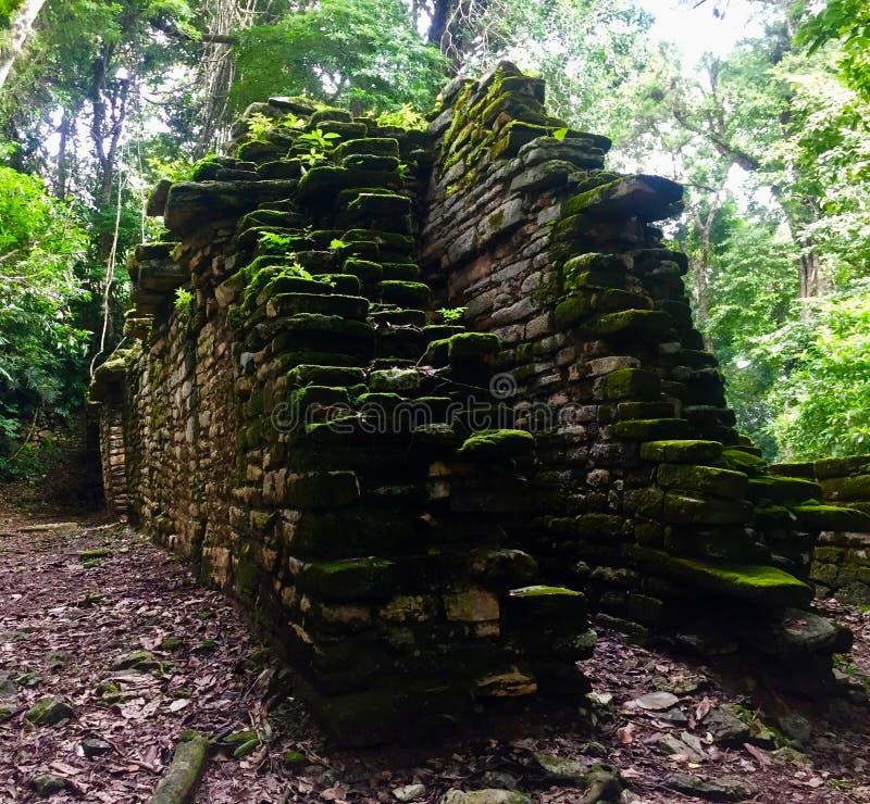 Forntida byggnad - Guatemala - naturliv royaltyfri foto