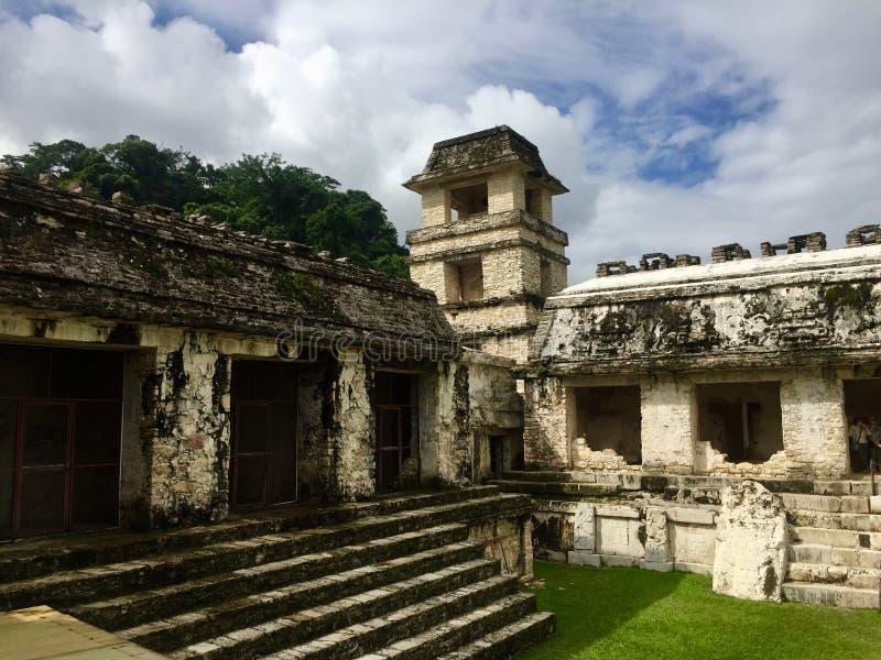 Forntida byggnad - nationalparken Palenque - naturliv royaltyfri foto