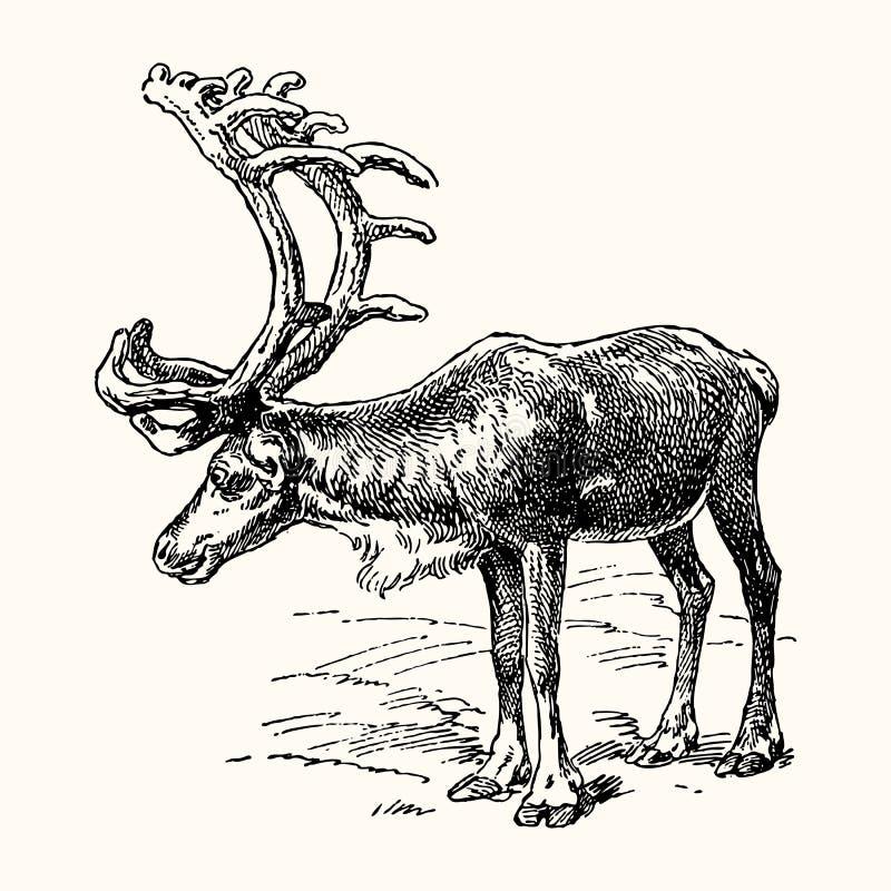 Forntida djur stock illustrationer