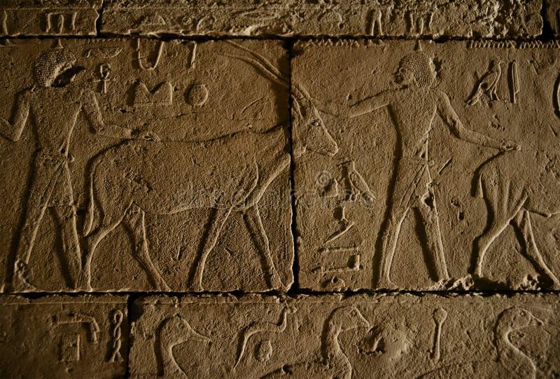 Forntida egyptisk hieroglyfervägg arkivfoton
