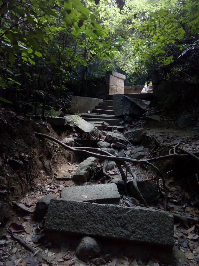 Forntida fördärvar i skog arkivfoton
