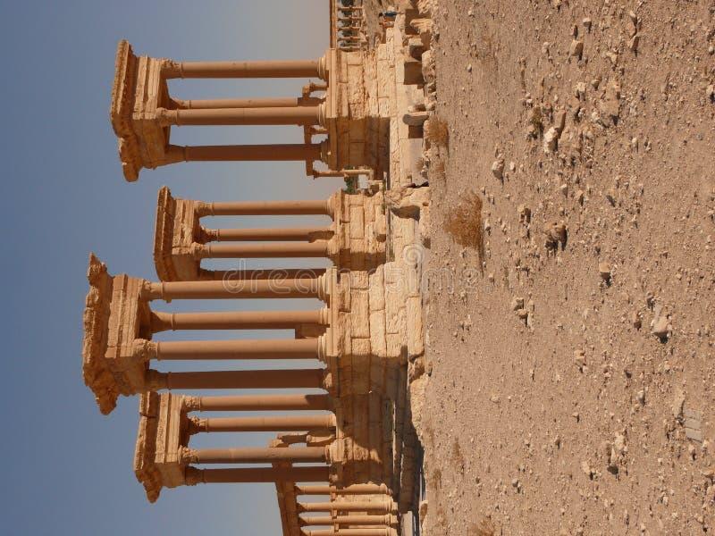 forntida kolonnpalmyra arkivfoto