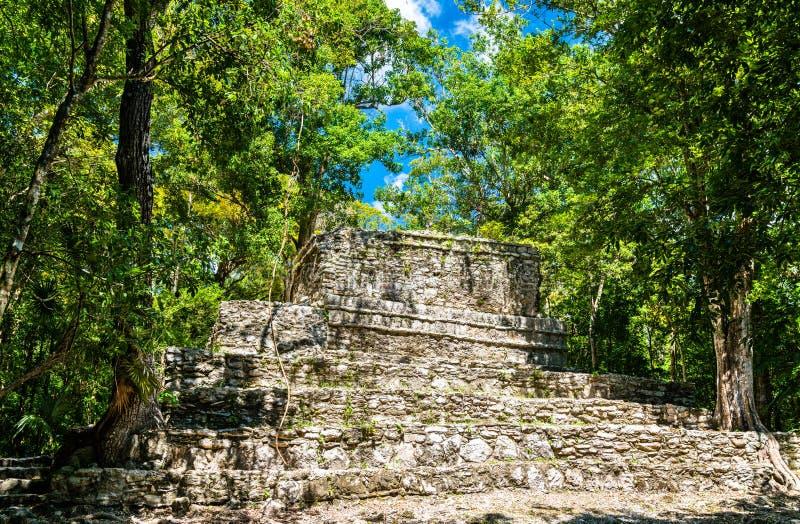 Forntida Mayan pyramid p? Muyil i Quintana Roo, Mexico royaltyfria foton