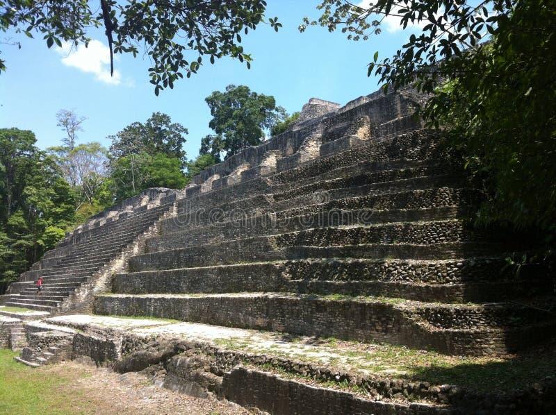 forntida mayan tempel royaltyfri bild