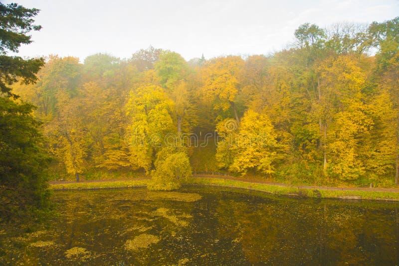 Forntida parkera sjön i höst royaltyfri bild
