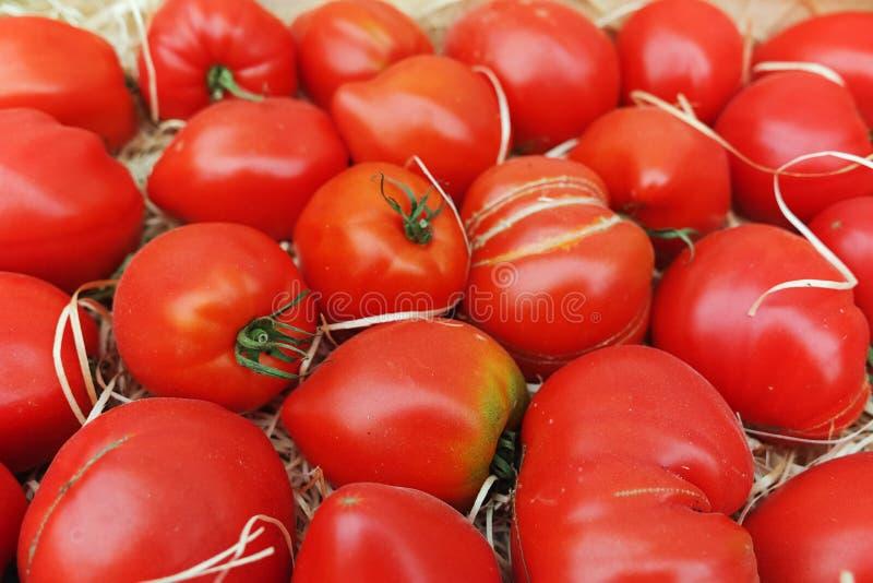 Forntida Provencal franska tomater på gatamarknaden arkivfoto