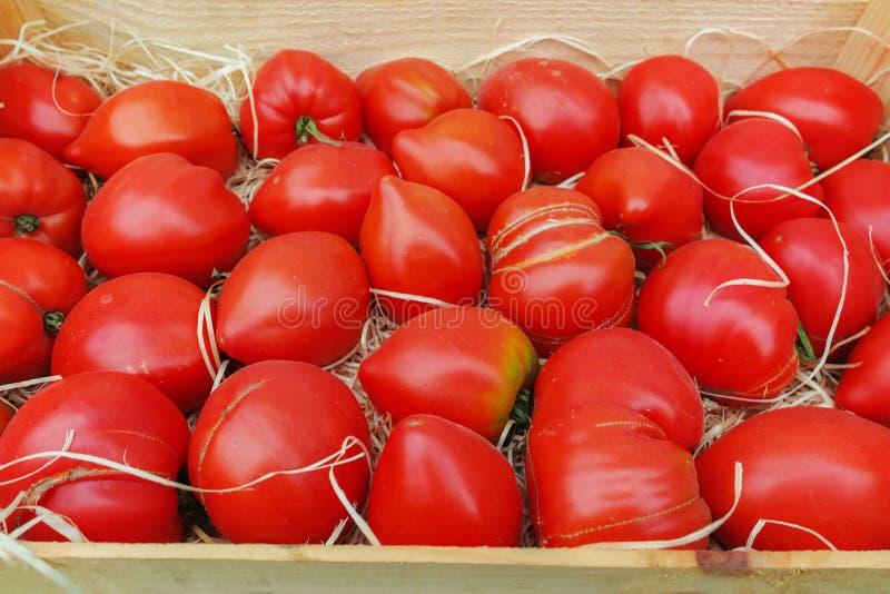 Forntida Provencal franska tomater på gatamarknaden royaltyfria foton
