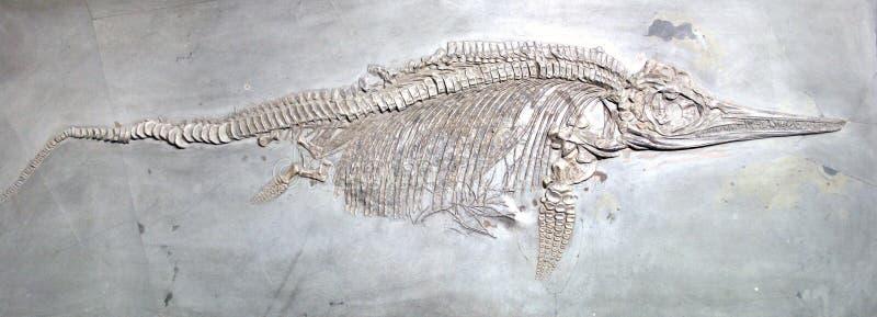 Forntida reptilfossil royaltyfri foto