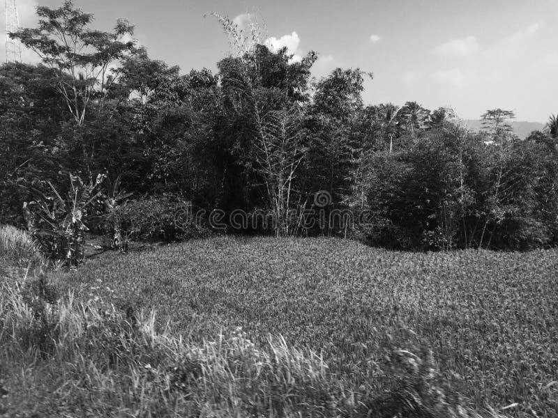 forntida skog royaltyfria foton