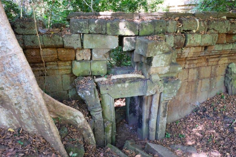 Forntida stena väggen med en liten dörröppning som täckas med torra sidor Del av en stor trädstam royaltyfria bilder