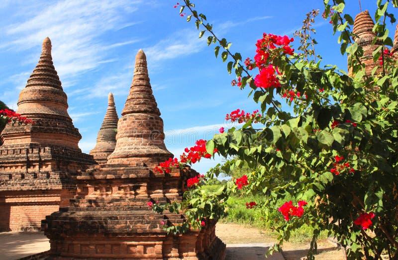 Forntida stupas i den arkeologiska zonen, Bagan, Myanmar royaltyfria bilder