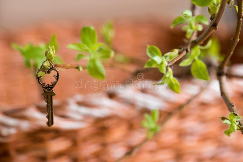 Forntida tappningtangent på en trädfilial, gröna barnsidor vår- och sommarvision arkivbilder