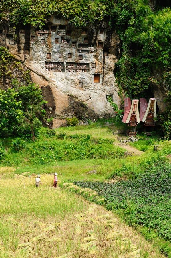 forntida toraja för indonesia sulawesi tanatomb royaltyfria bilder