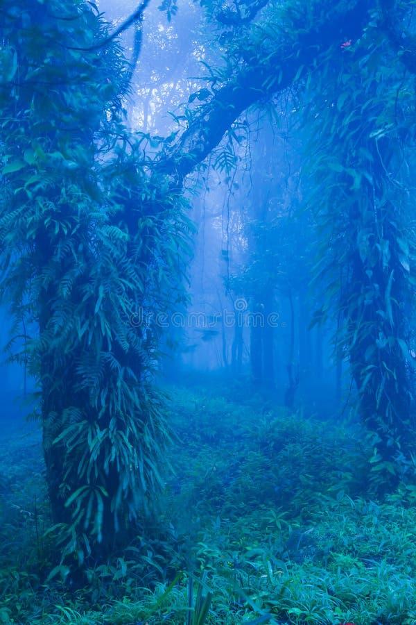 Forntida träd för mystiker i blå dimmig skog, frodiga tropiska växter i stammen och filialer av gamla träd fotografering för bildbyråer