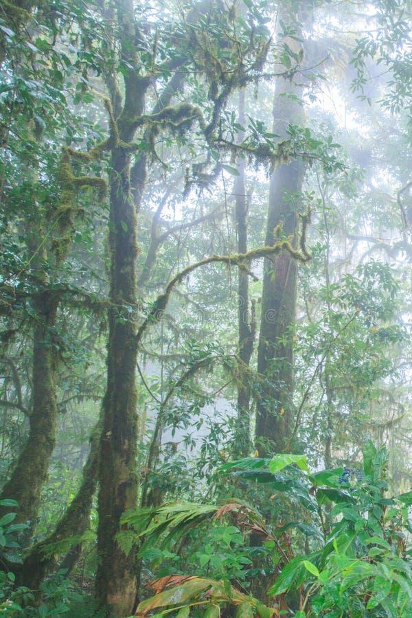 Forntida tropisk skog i den nya epiphyten för mist, ormbunke, mossa, lav i de tropiska träden Doi Pha Hom Pok, Thailändsk-Myanmar arkivbild
