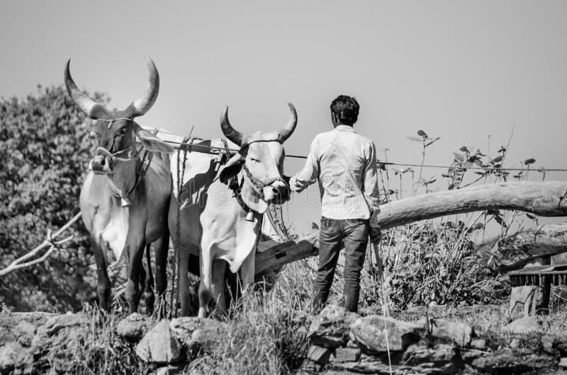 Forntida vattenhjul i Gujarat, Indien royaltyfri fotografi