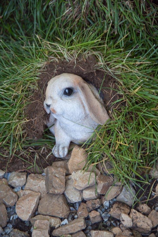 Foro di coniglio fotografia stock
