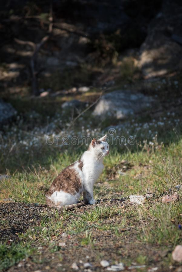Wild homeless ragged cats walk in nature on the southern coast of the Crimea peninsula. Foros, Republic of Crimea - April 1, 2019: Wild homeless ragged cats walk royalty free stock image