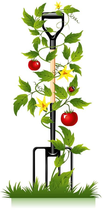 Forquilha e tomate do jardim ilustração royalty free