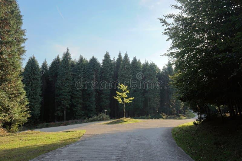 Forquilha na estrada do condado fotos de stock royalty free