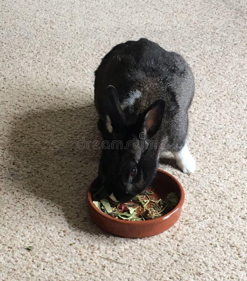 Forraje del conejo imagen de archivo libre de regalías