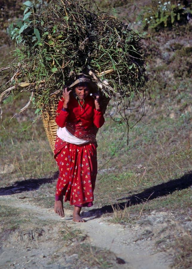 Forraje que lleva de la mujer del Nepali de nuevo a su aldea foto de archivo libre de regalías