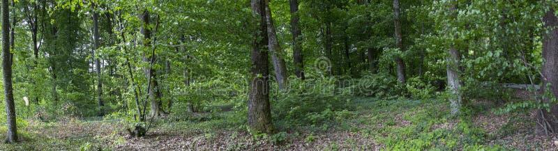 Forrest全景 免版税图库摄影