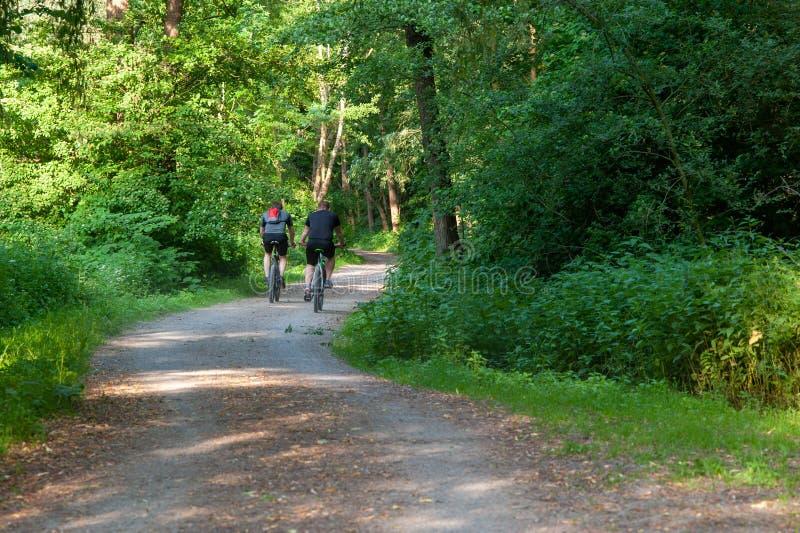 forrest道路的体育骑自行车的人 免版税库存图片